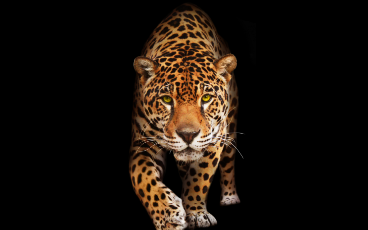 jaguar-2880x1800-dark-hd-10474.png
